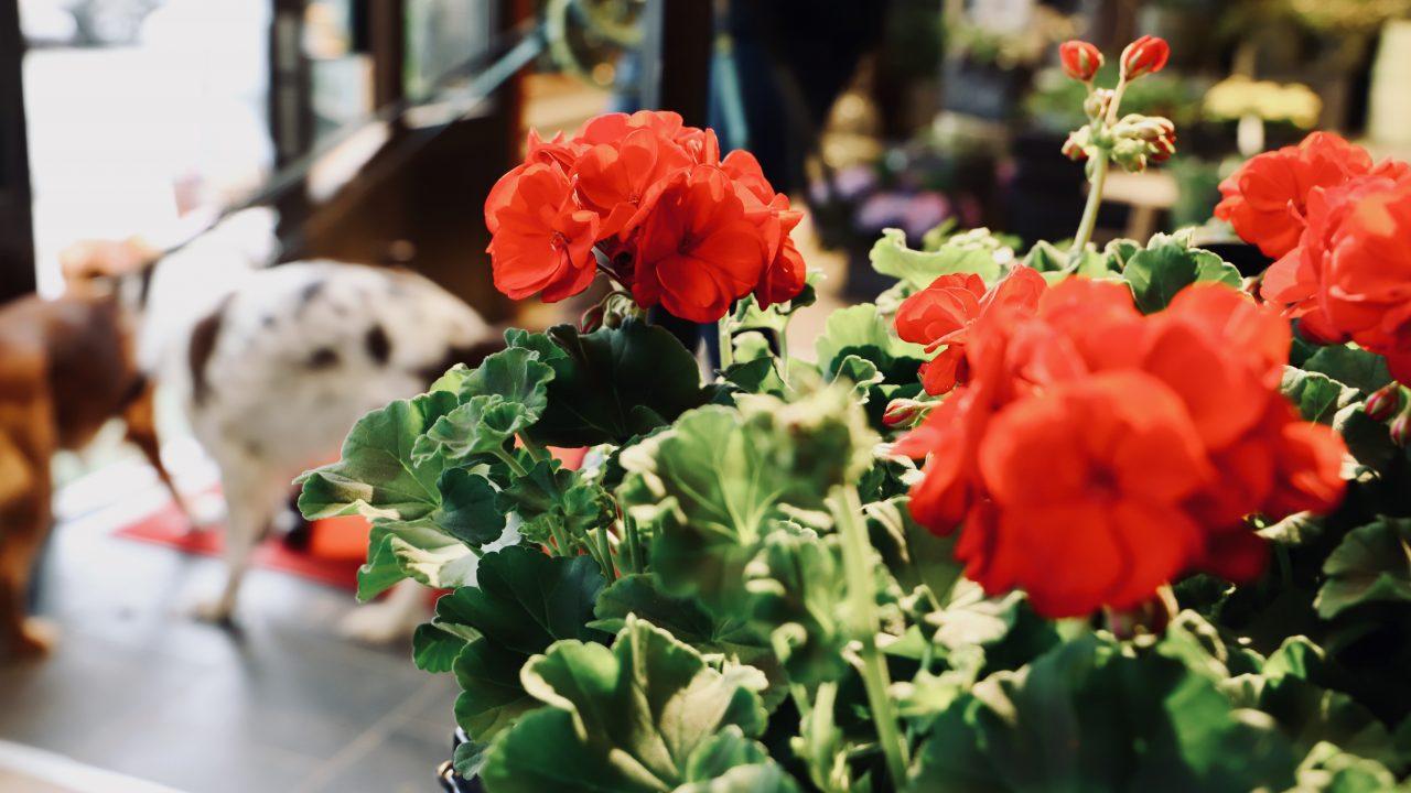 De små gesternas tid är nu — Vinn blomleverans från Norma Jeane Blomster
